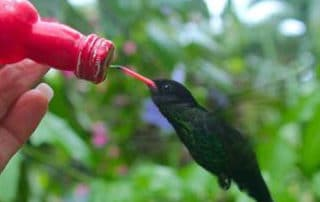 a hummingbird being fed