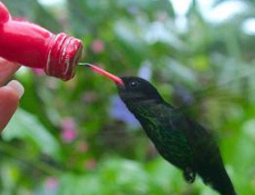 Barney's Hummingbird Garden Tour